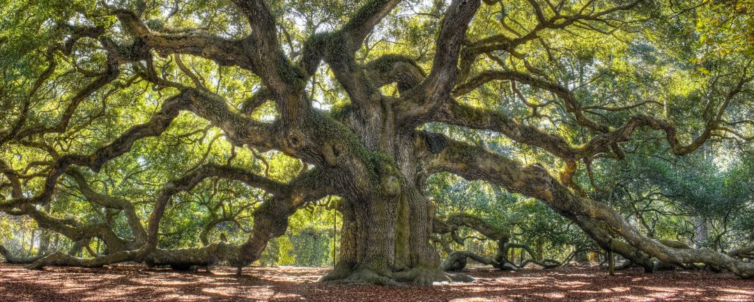 How to Create an Oak Cluster With MongoMK Failover