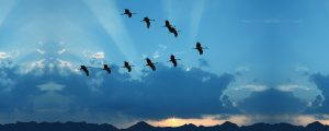 CMS Migration With a 4-D Approach